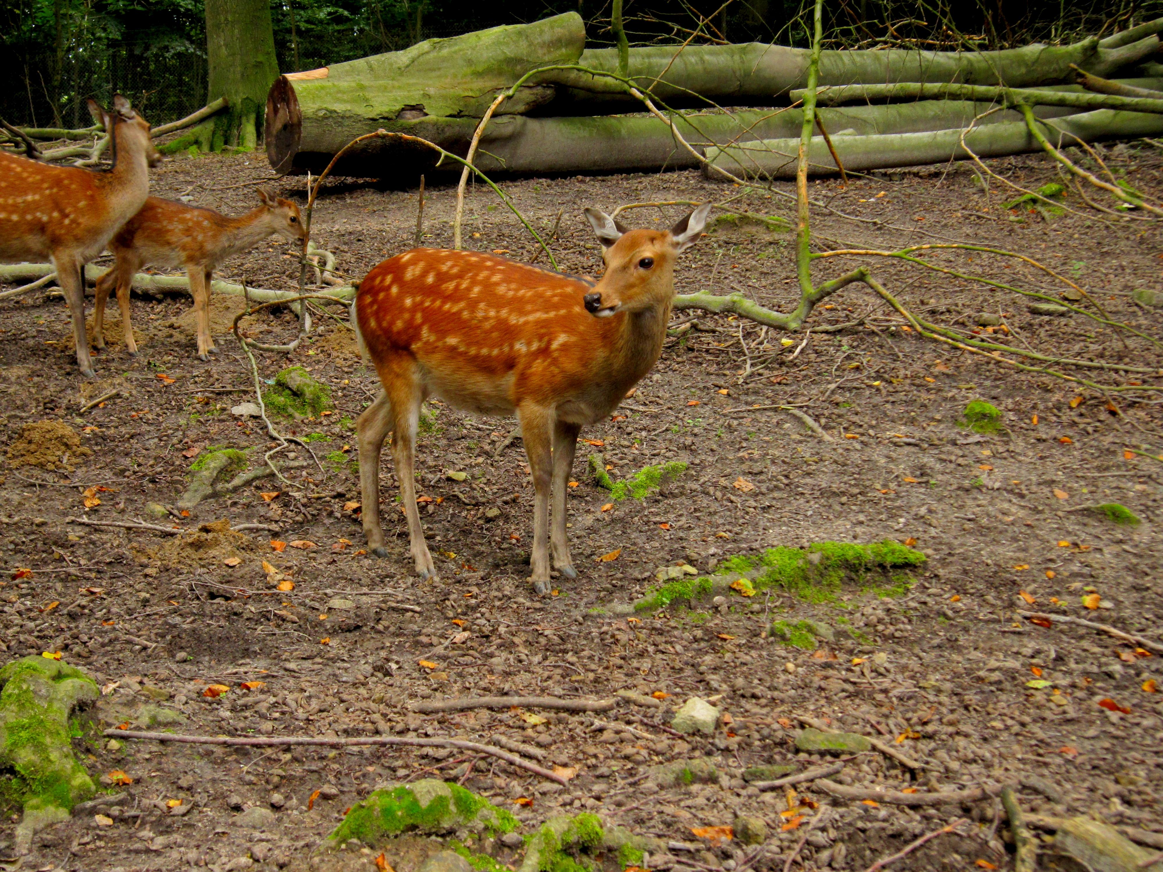 Tierpark Bielefeld Olderdissen (1)