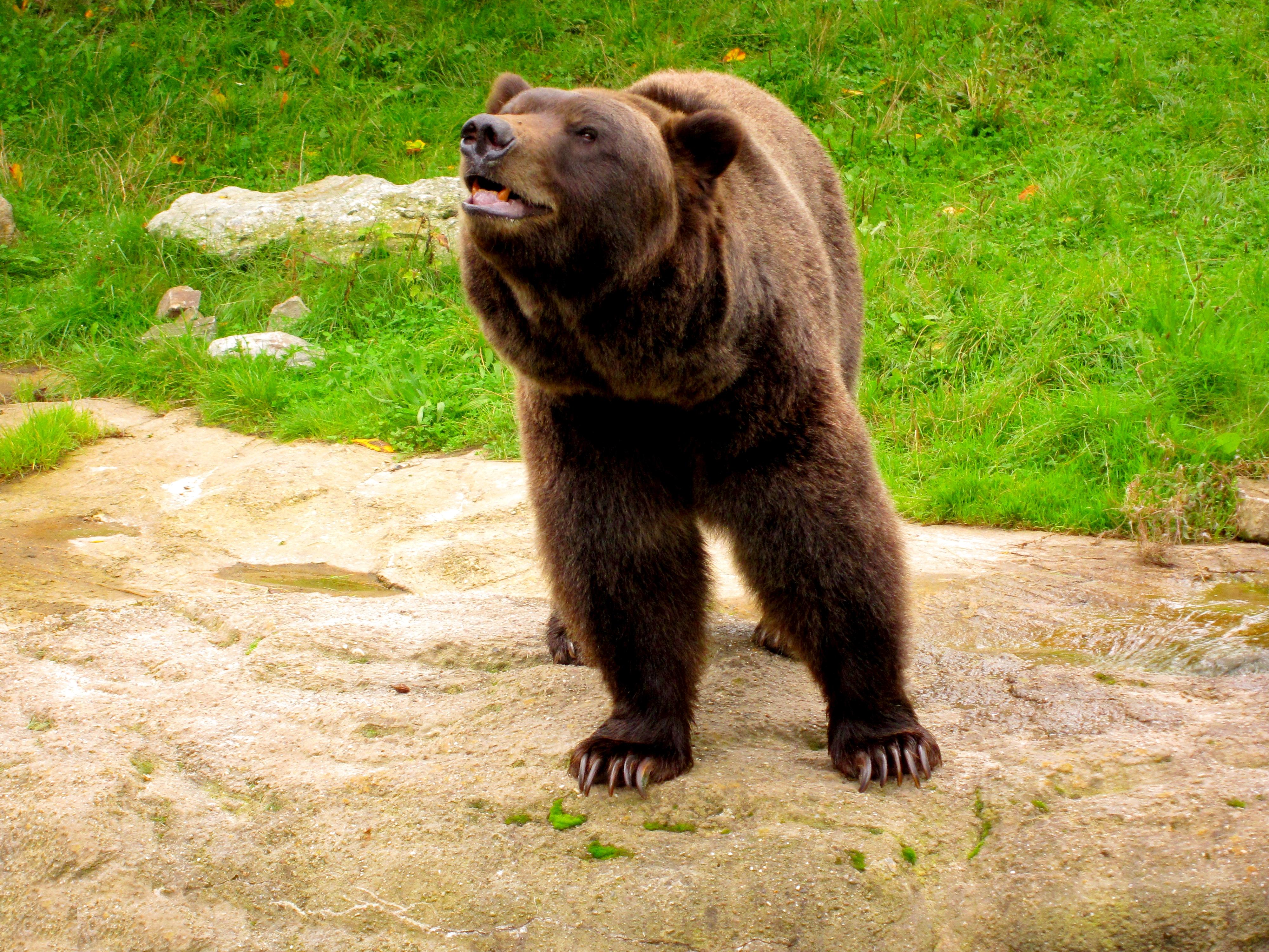 Tierpark Bielefeld Olderdissen (13)