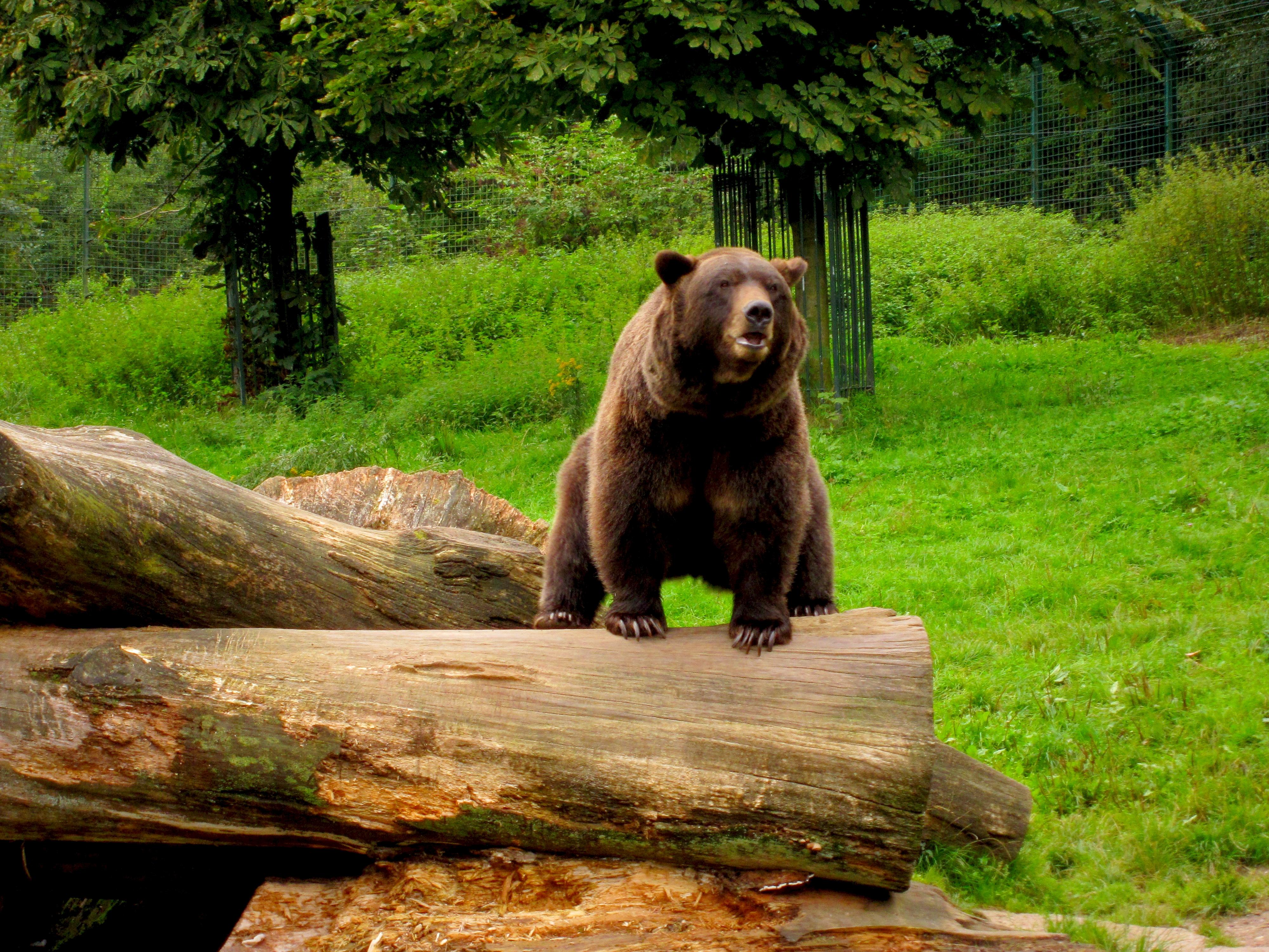 Tierpark Bielefeld Olderdissen (14)
