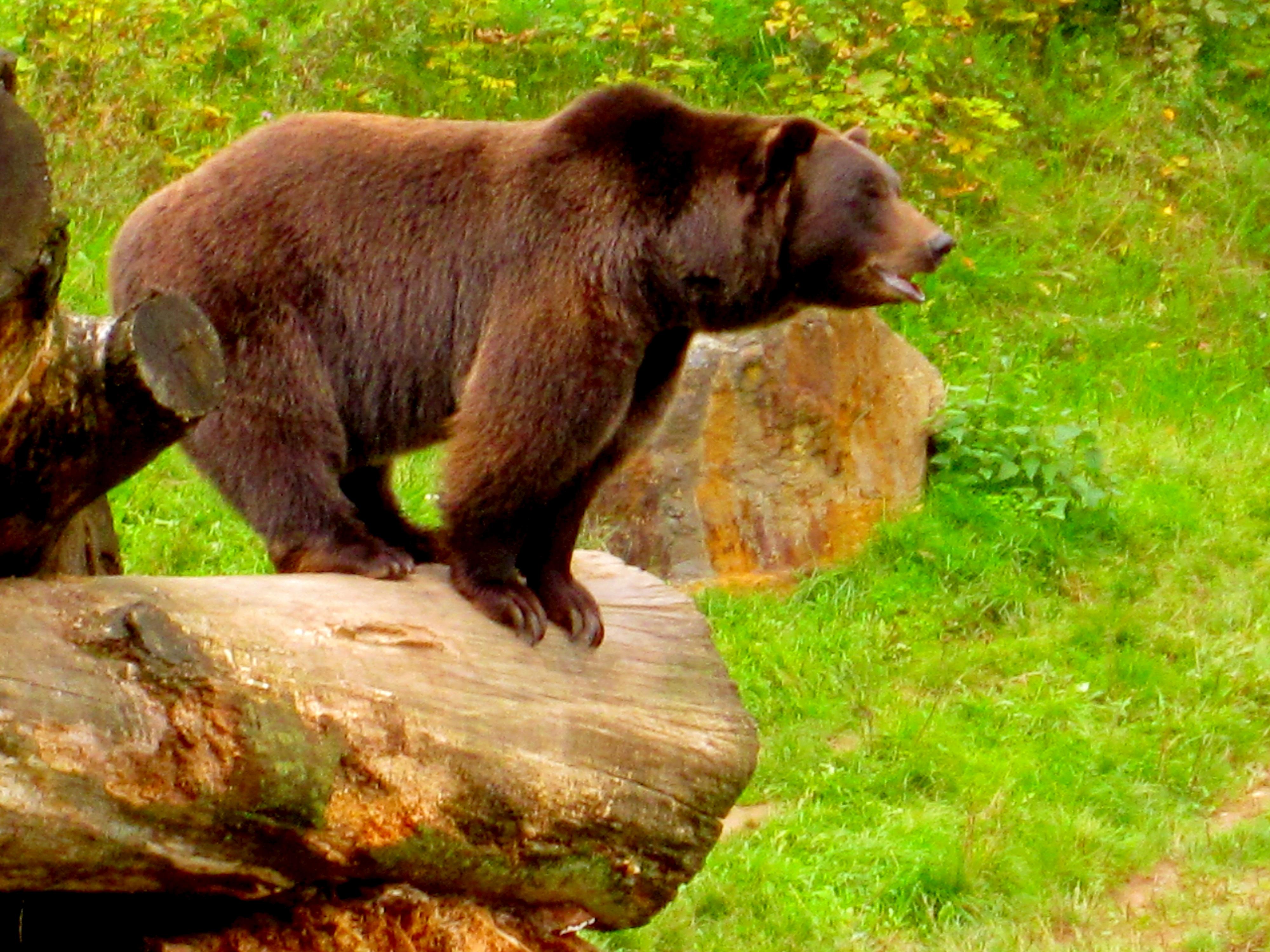 Tierpark Bielefeld Olderdissen (15)