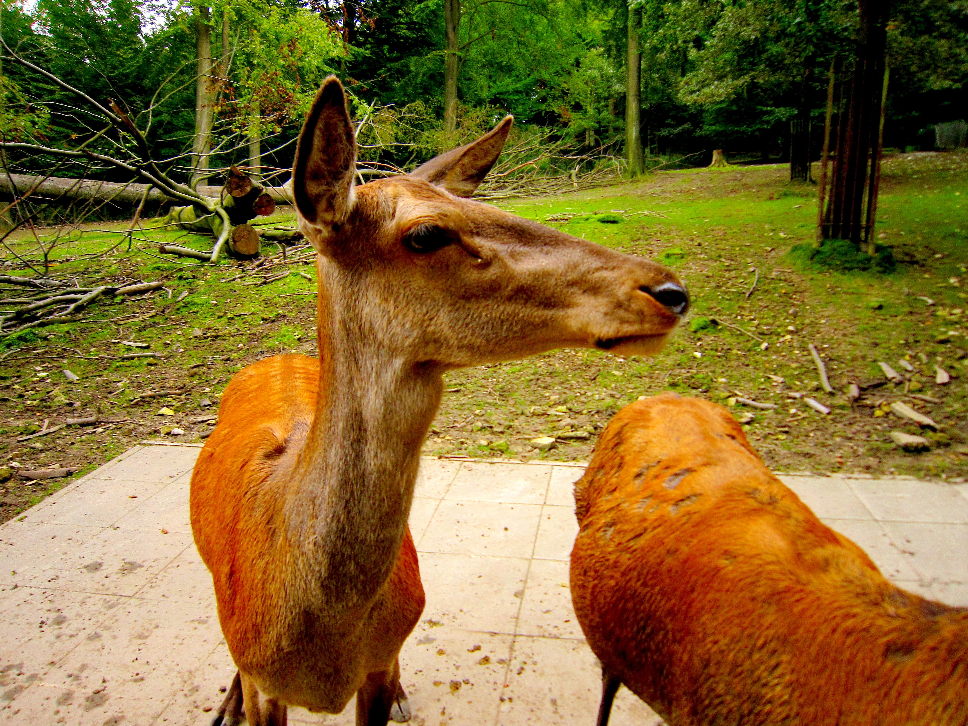 Tierpark Bielefeld Olderdissen (19)