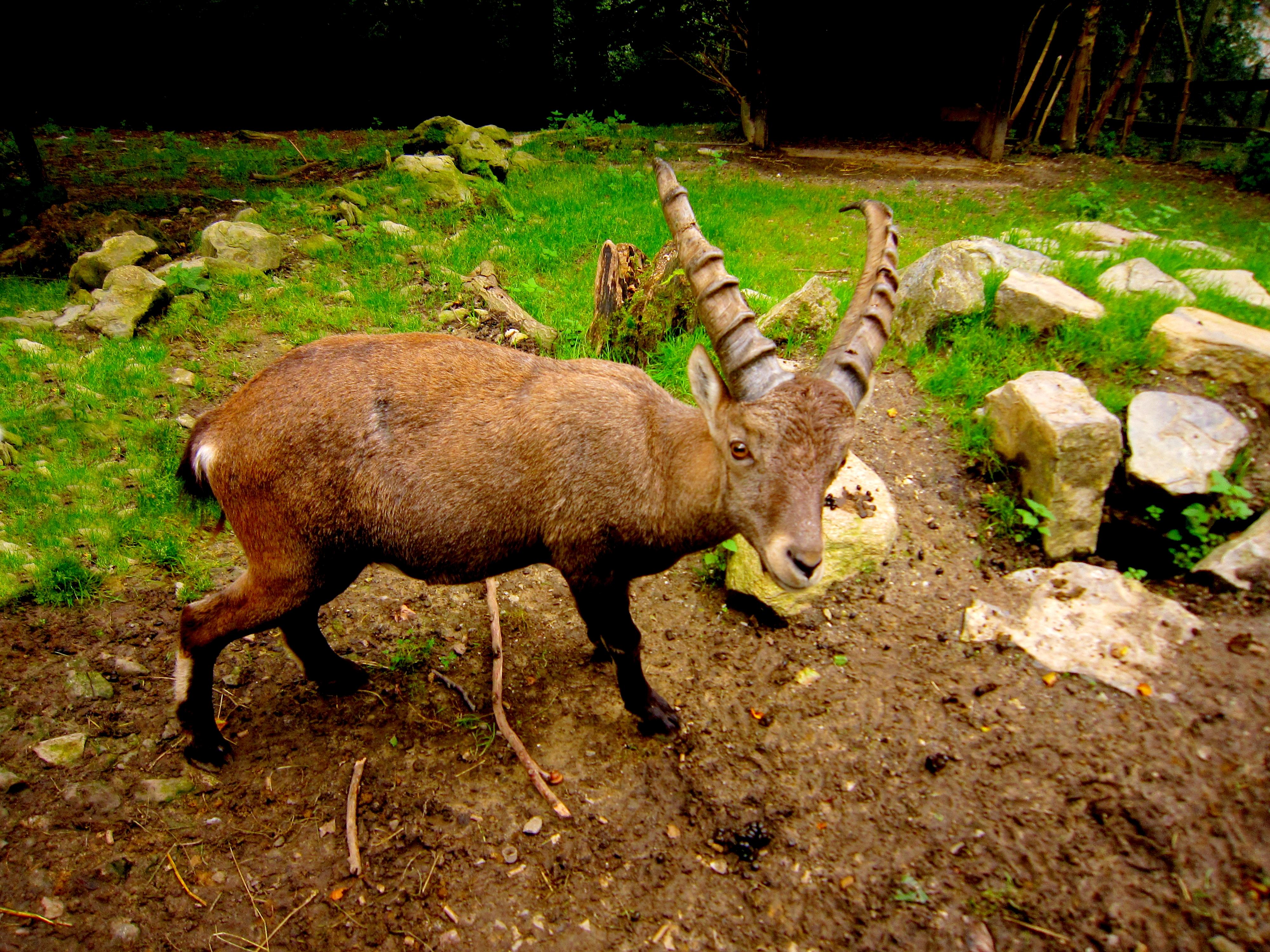 Tierpark Bielefeld Olderdissen (20)
