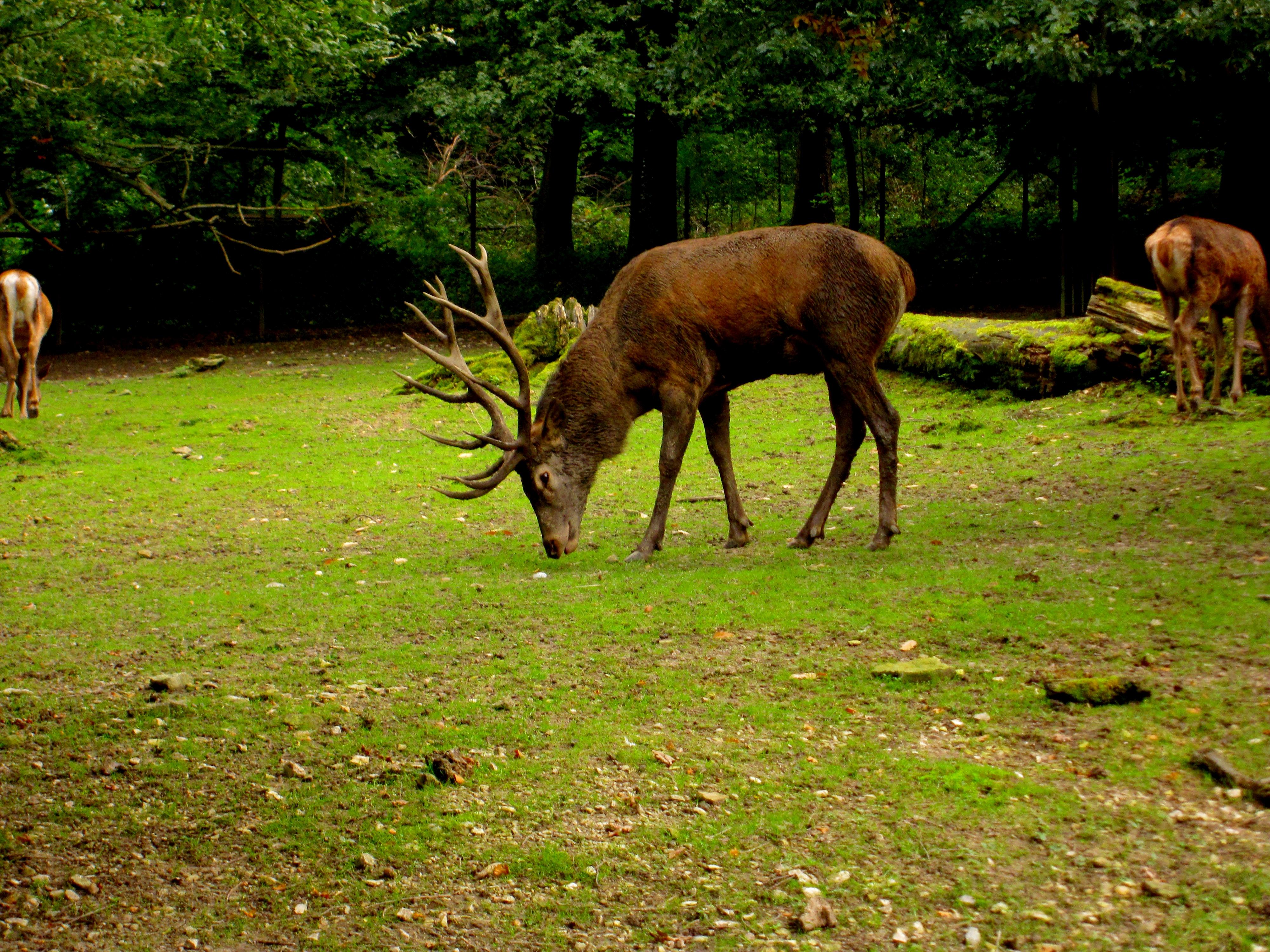 Tierpark Bielefeld Olderdissen (28)