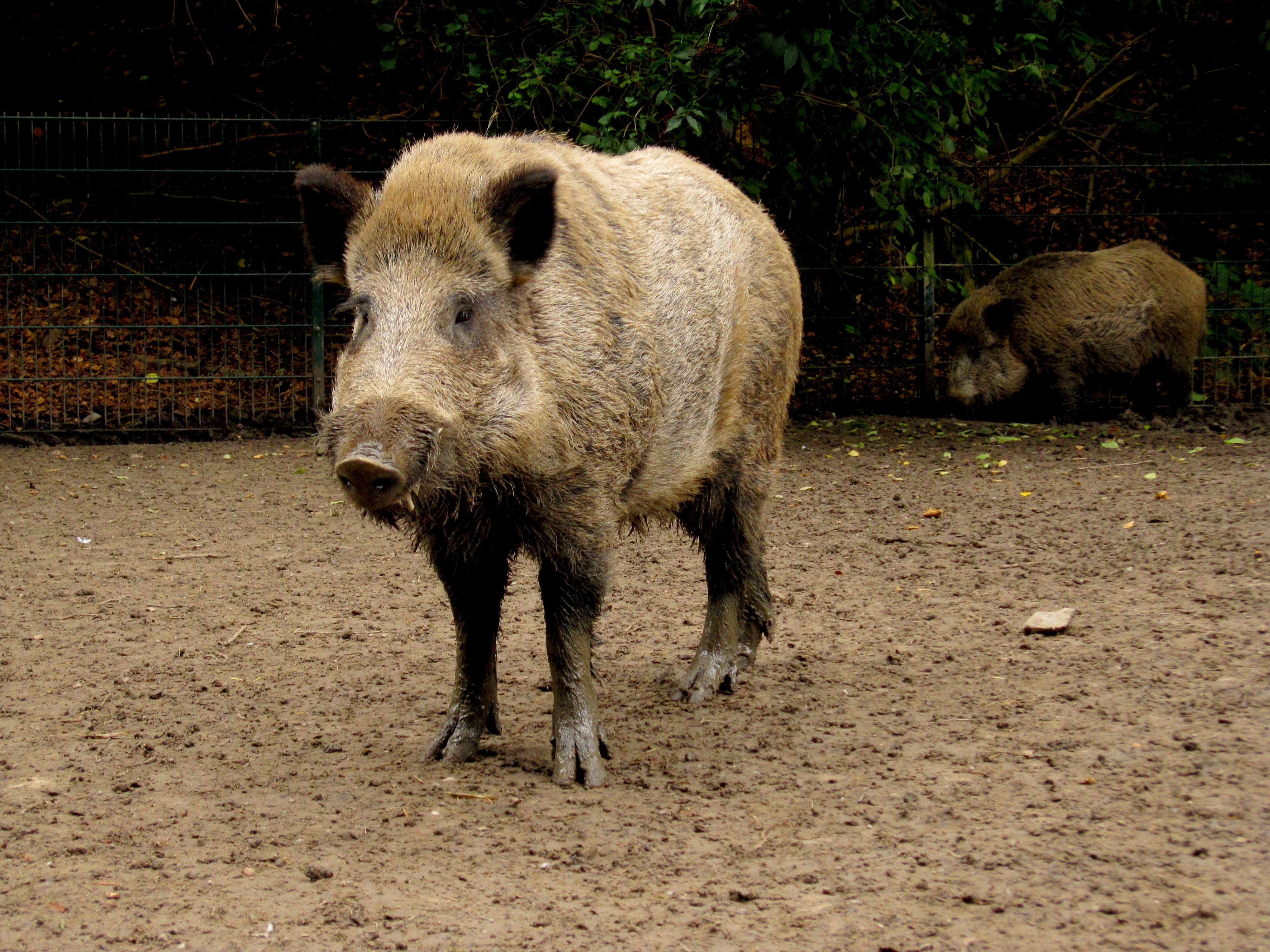 Tierpark Bielefeld Olderdissen (3)