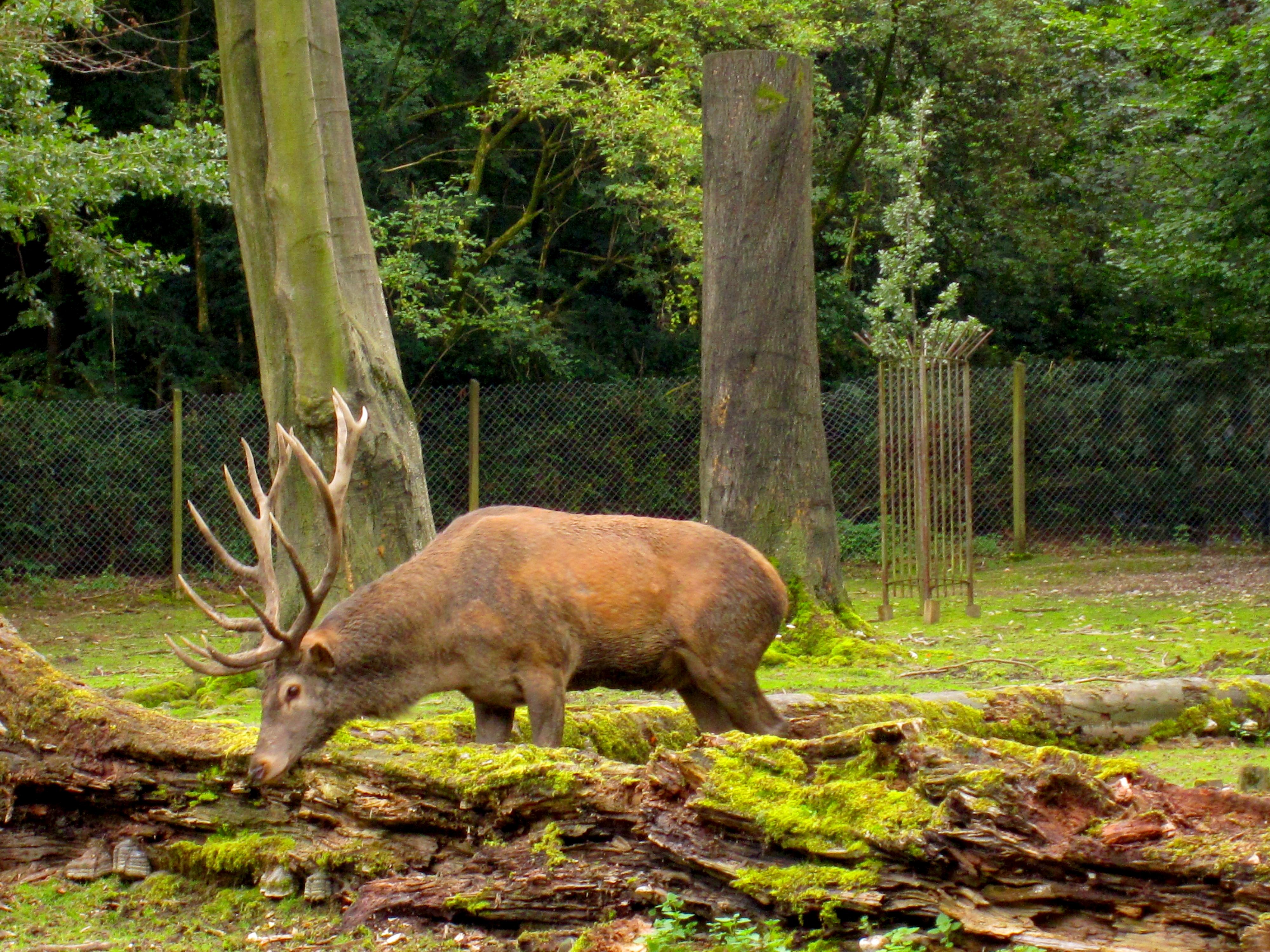Tierpark Bielefeld Olderdissen (32)