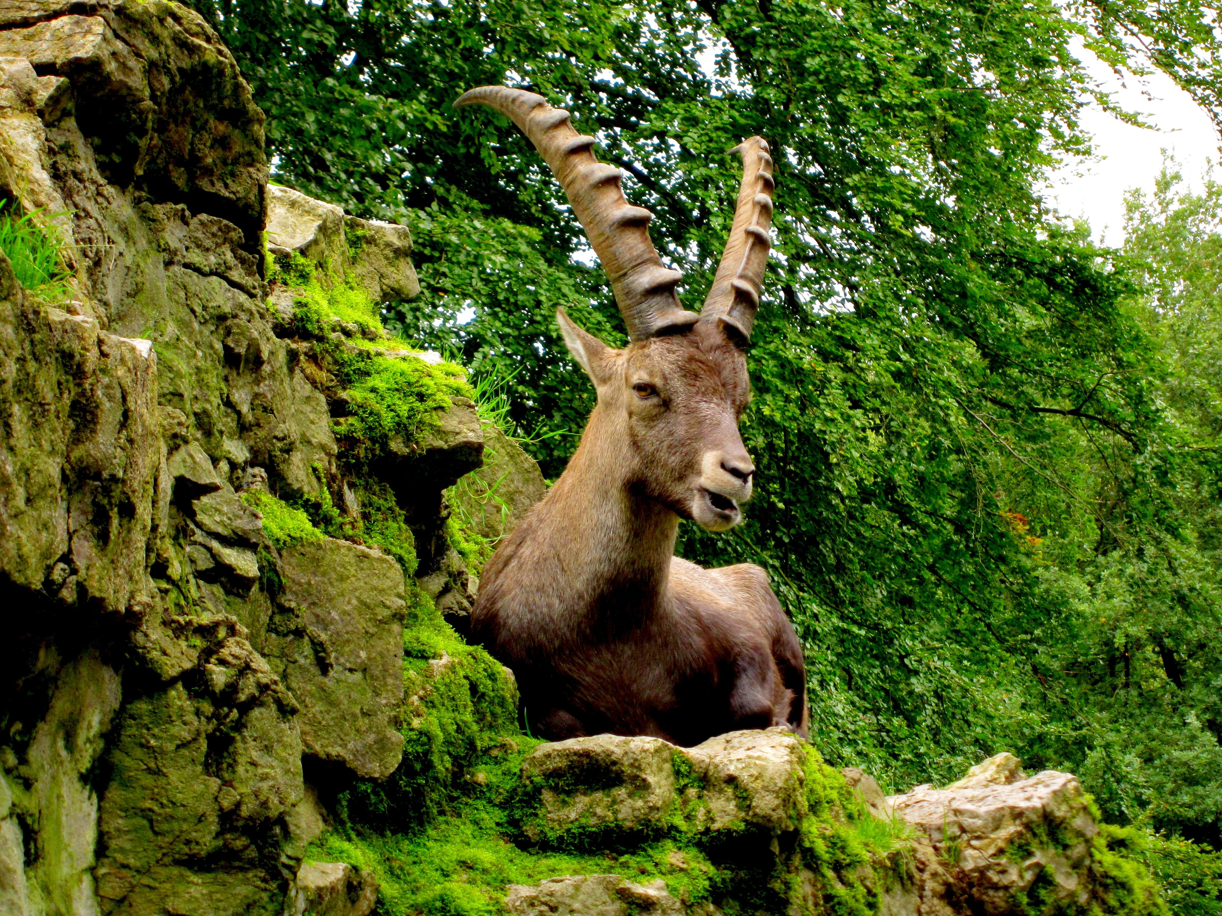 Tierpark Bielefeld Olderdissen (34)
