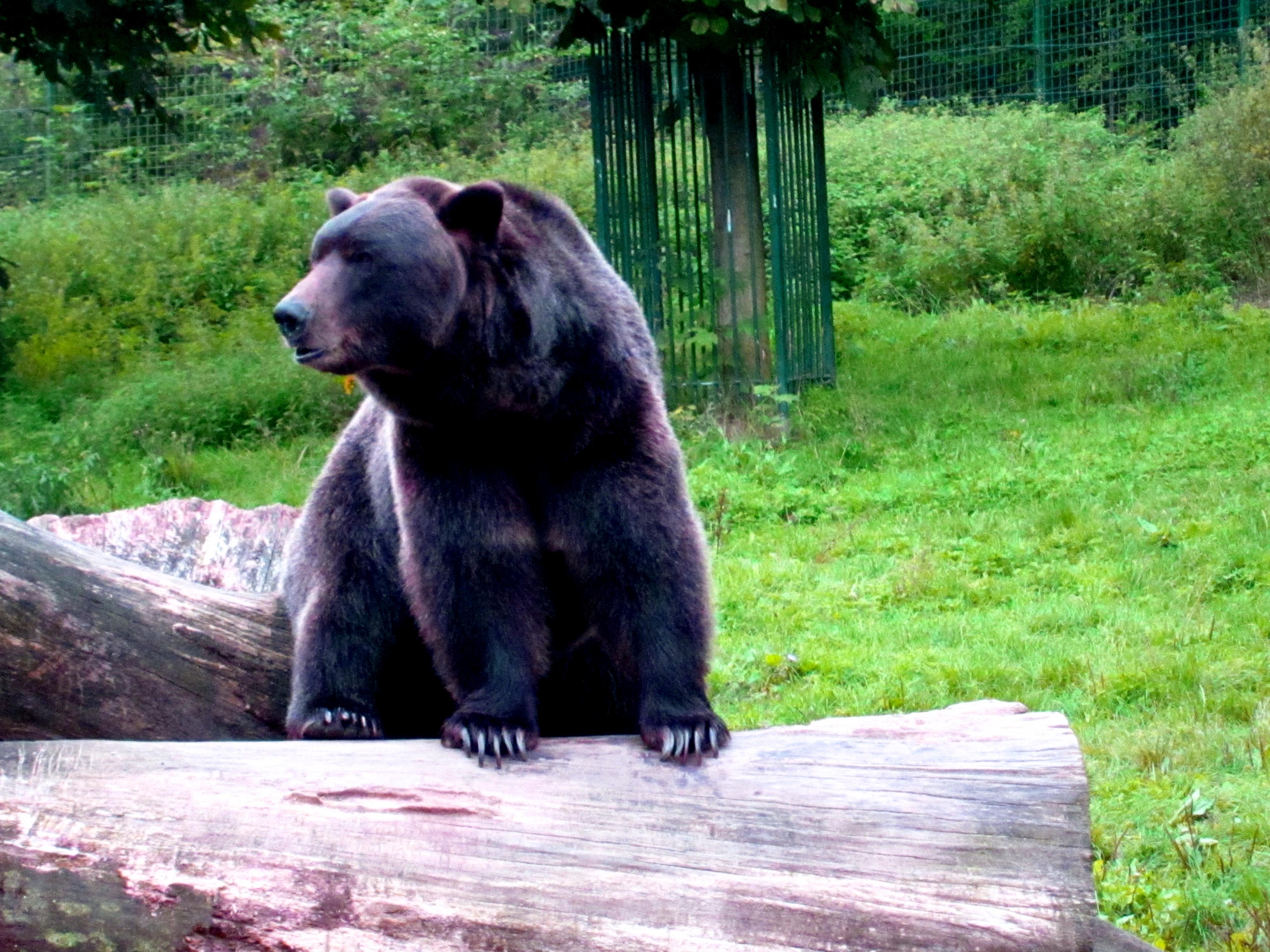 Tierpark Bielefeld Olderdissen (4)