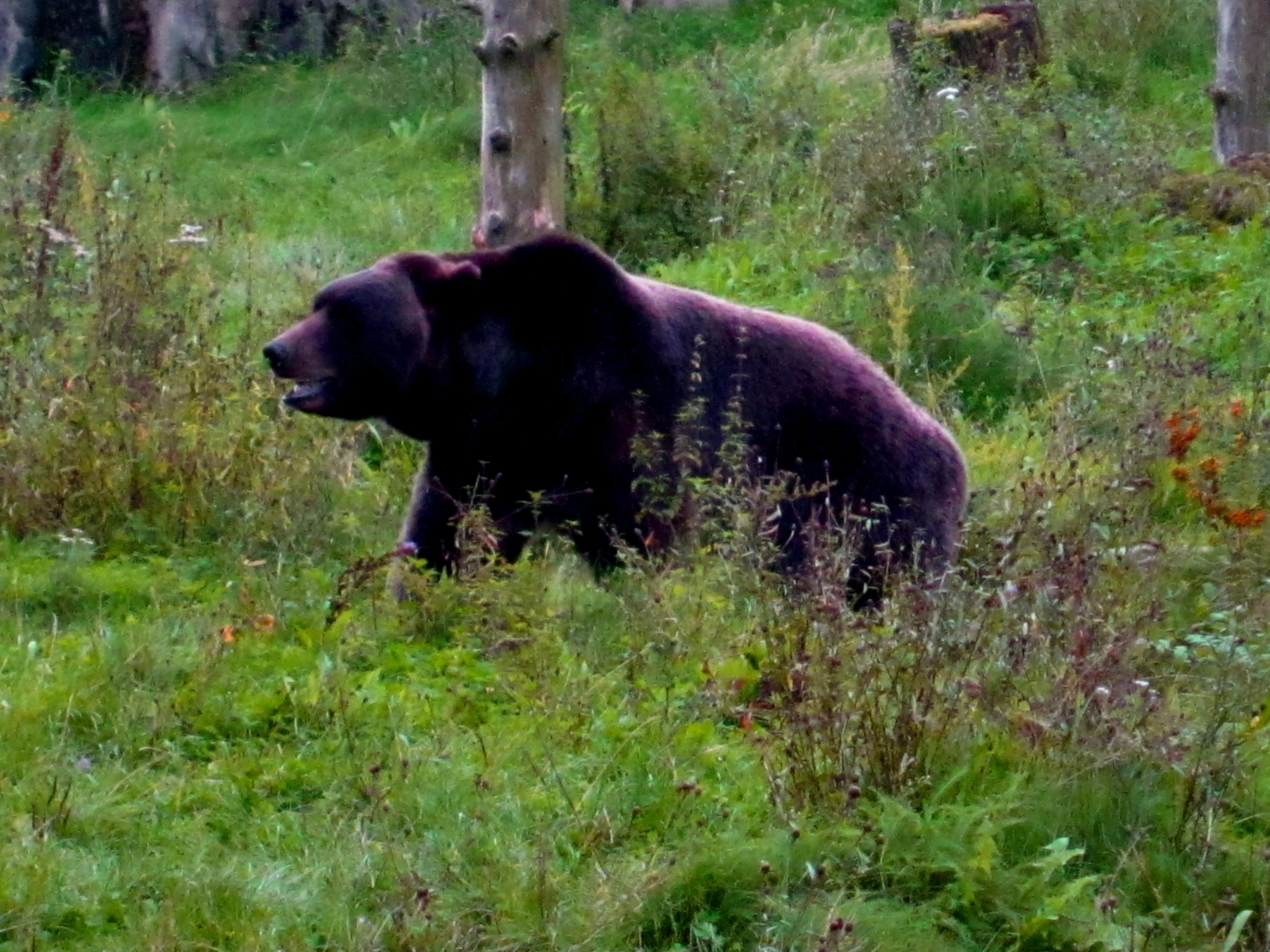 Tierpark Bielefeld Olderdissen (5)