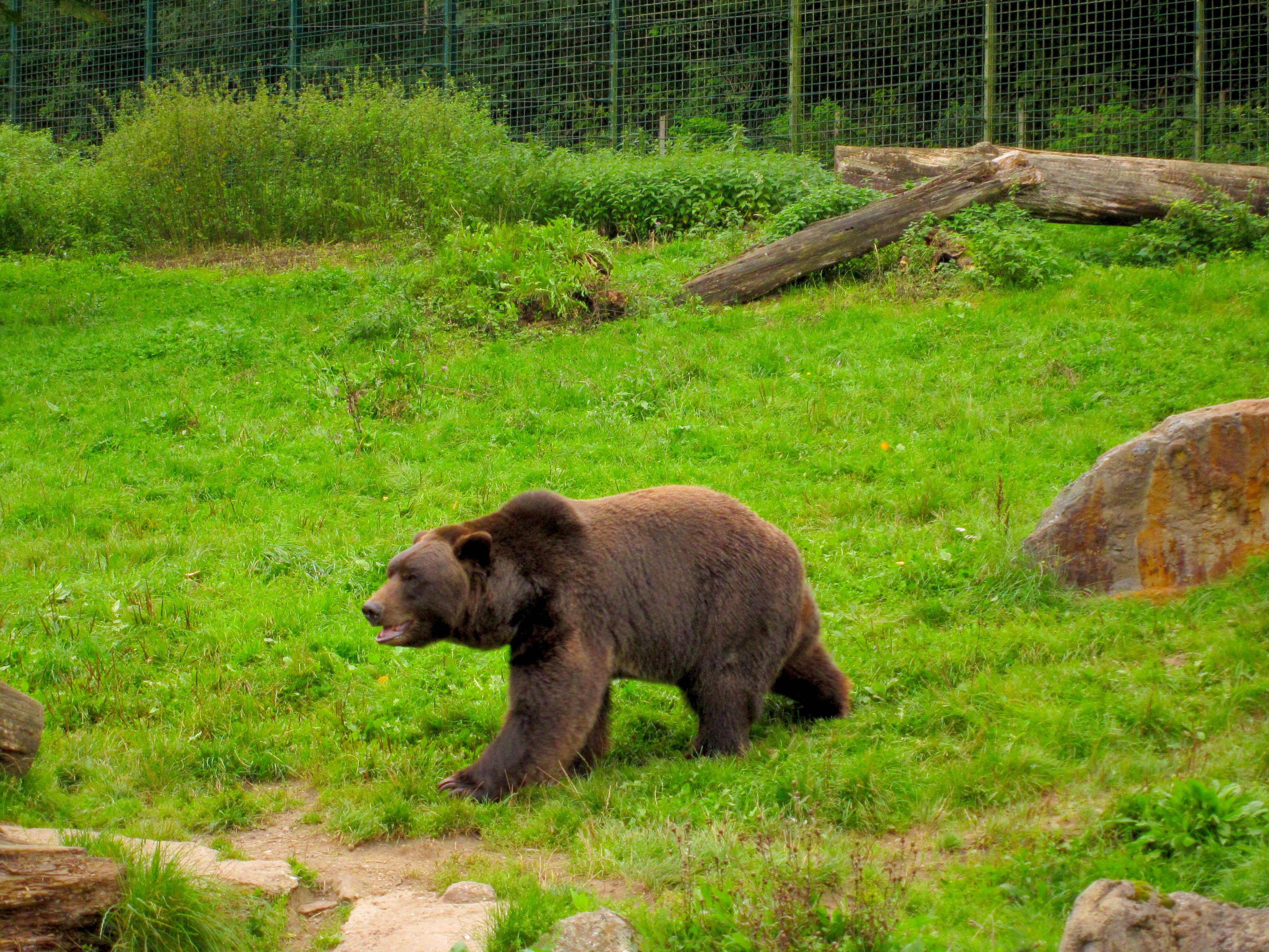 Tierpark Bielefeld Olderdissen (9)